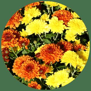 fall color enhancements