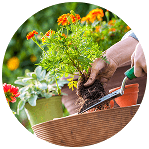 proper planting