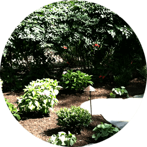 Shrubs and Mulch Landscaping