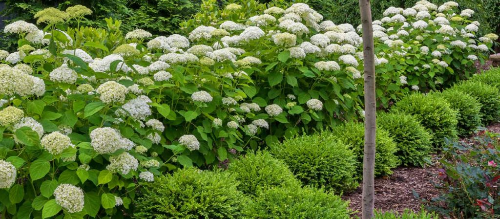 Flowering shrubs in garden