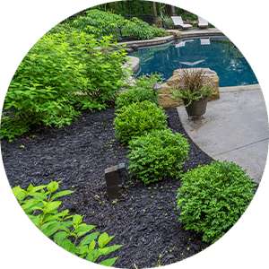 mulch in beds by pool