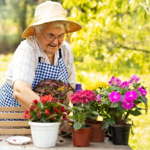 How to Choose the Best Flowers to Plant in a Small Area