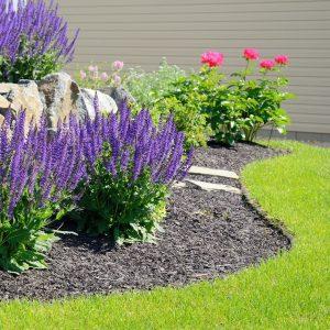 Plant Placement Design